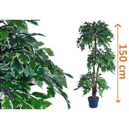 Umělá rostlina jako živá - Fíkus v květináči 150 cm