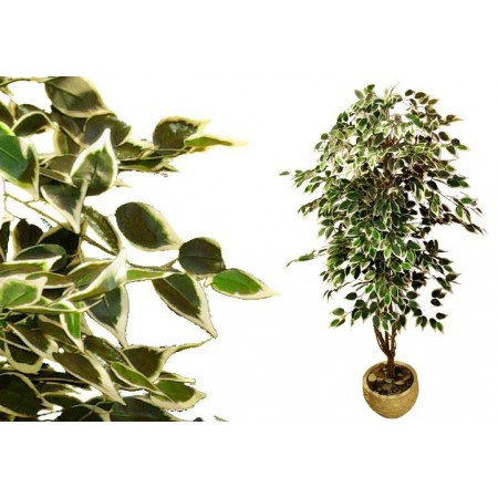 Umělá rostlina- fíkus, jako živý, 185 cm