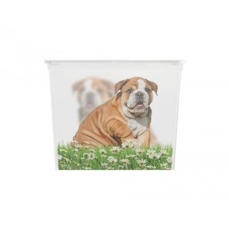 Úložný plastový box s víkem, průhledný + potisk psi, velký, 50 L