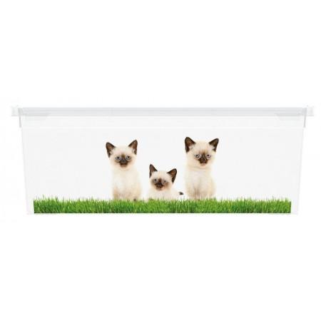 Úložný plastový box s víkem, průhledný + potisk kočky, 6 L
