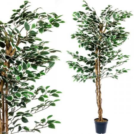 Umělá rostlina jako živá - Fíkus 160 cm